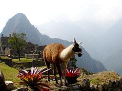秘鲁马丘比丘